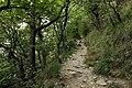 National nature reserve Milešovka in summer 2014 (10).JPG