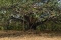 Nature of North Goa, Pernem 2020-01-08.jpg