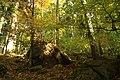 Nature reserve Ptaci stena in autumn 2011 (15).JPG