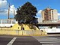 """Natureza Preservada - árvore protegida pelo concreto, """"mergulhão"""" do Trensurb Guilherme Schell defronte Shopping Canoas - panoramio.jpg"""
