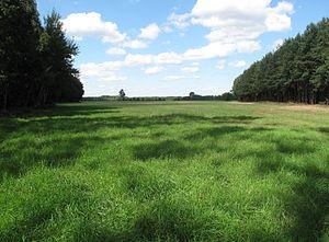 Forage - Meadow of perennial ryegrass (Lolium perenne)