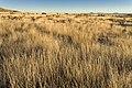 Near Chatfield Canyon - Flickr - aspidoscelis (3).jpg