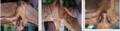 Neopteryx frosti.png