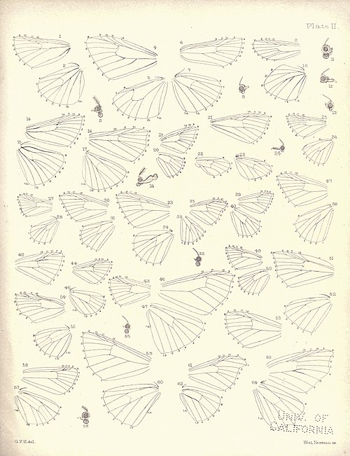 New Zealand Moths and Butterflies (1898) 02.jpg