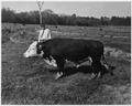 Newberry County, South Carolina. Misc. (No detailed description given.) - NARA - 522740.tif