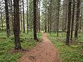 Nyrölä nature trail 6.jpg