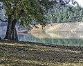 Oak Tree over Shasta Lake (33354912313).jpg