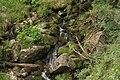 Oasi valtrigona Rio Valtrigona3.jpg