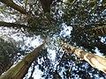 Oguni, Tsuruoka, Yamagata Prefecture 999-7316, Japan - panoramio (1).jpg