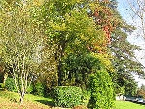 Oloron-Sainte-Marie - Image: Oloron Pomme 02
