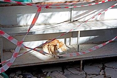 Omodos cat 2010.jpg