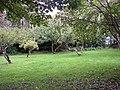 Orchard, Caldey Island - geograph.org.uk - 590662.jpg