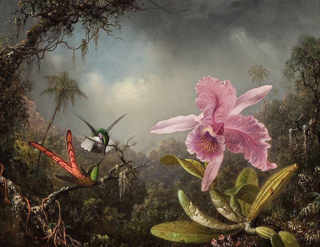 Орхидея с двумя колибри 1871.jpeg