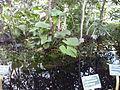 Orto botanico di Napoli 39.jpg