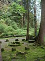 Osada - panoramio (4).jpg