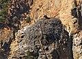 Osprey Nest (8044069740).jpg