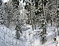 Ostrovsky District, Kostroma Oblast, Russia - panoramio - Andris Malygin (2).jpg