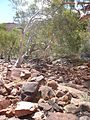 Outback Trip - Kings Canyon 6 (4132263305).jpg