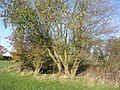 Overgrown pond - geograph.org.uk - 284859.jpg