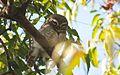Owl (16374729726).jpg