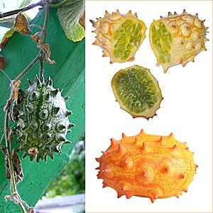 Cucumis metuliferus - Image: Owoce Kiwano