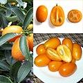 Owoce Kumkwat.jpg