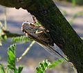 P1140665 - Flickr - gailhampshire.jpg