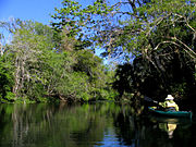 Paddling on the Hillsborough River