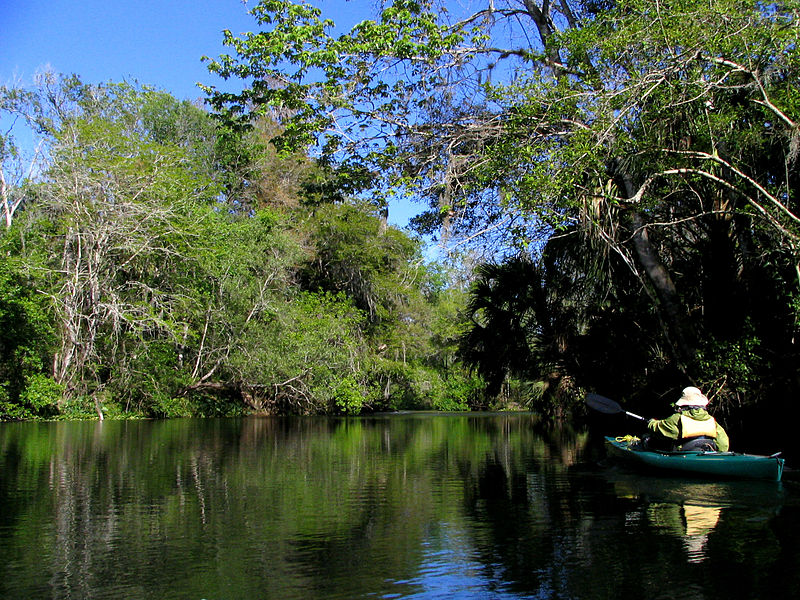 File:Paddling on the Hillsborough River.jpg
