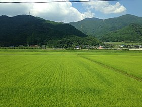 Paddy fields near Iwaya Station from train of Karatsu Line.jpg