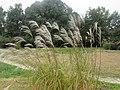 Pagels' Garten, auf der Wiese.jpg