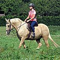 Palomino horse on Matching Green village green, Essex, England 1.jpg