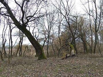 Park in Stara Pryluka (Mar 2021) 2.jpg