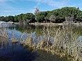Parque Infanta Elena (Sevilla) 10.jpg