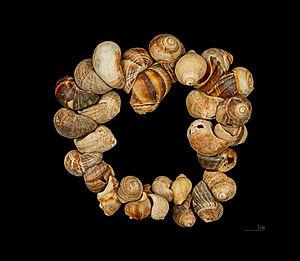 Louis Lartet - Shell adornement of Cro-Magnon - Collection Louis Lartet - Muséum de Toulouse