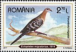 Passenger-Pigeon-Ectopistes-migratorius.jpg