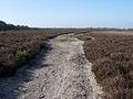 Path across Dibden Bottom - geograph.org.uk - 1286608.jpg