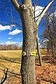 Perimeter Trail (11) (16850709259).jpg
