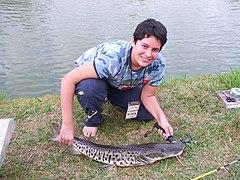 Pescadorpintado.jpg