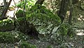 Petaloudes - mossy rock - panoramio.jpg