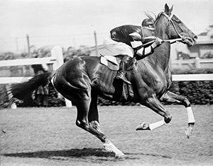 Australian Derby - Phar Lap (pictured in 1930), 1929 AJC Derby winner. Jockey Jim Pike