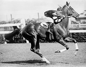 Australian Derby - Phar Lap (pictured in 1930), 1929 AJC Derby winner. Jockey Jim Pike