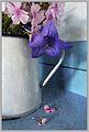 Phlox rose et platycodon violet.jpg