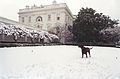 Photograph of Buddy the Dog Playing in the Snow at the White House- 01-20-2000 (6461543593).jpg