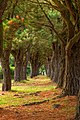 Pine Tree Trail - HDR (11813903563).jpg