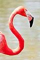 Pink (6557453923).jpg