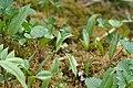 Plants - Kitchener, Ontario 01.jpg
