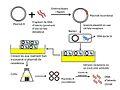 Plasmidi R com a vector de clonació del DNA.jpg