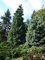 Poltava Botanical garden (37).jpg