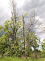 Postojna - broken trees2.jpg